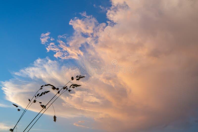 Trawa ustawiająca przeciw chmurze znaczy zmianę w pogodzie zdjęcia stock