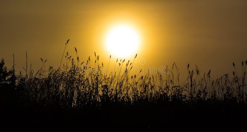 Trawa w mglistym świcie obraz stock