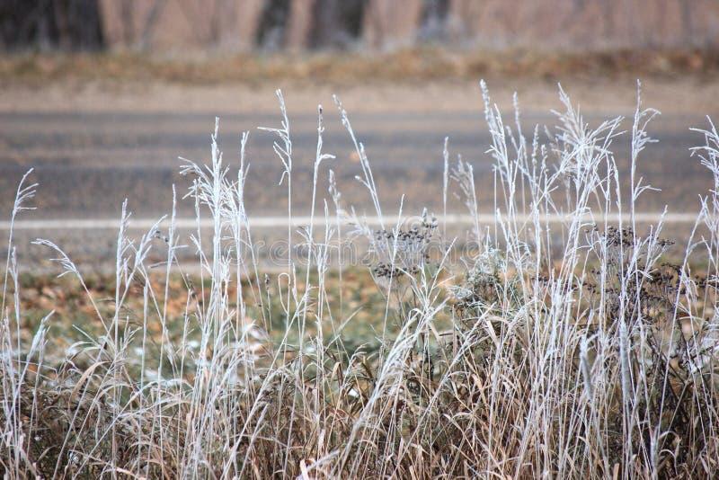 Trawa z mrozem blisko drogi Zima przychodził nieoczekiwanie Wysuszona trawa headpiece, tło obrazy stock
