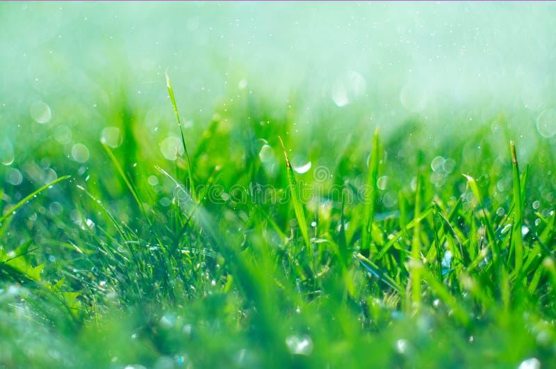 Trawa z podeszczowymi kroplami Podlewanie gazon deszcz Zamazany zielonej trawy tło z wodą opuszcza zbliżenie Natura środowisko obraz stock
