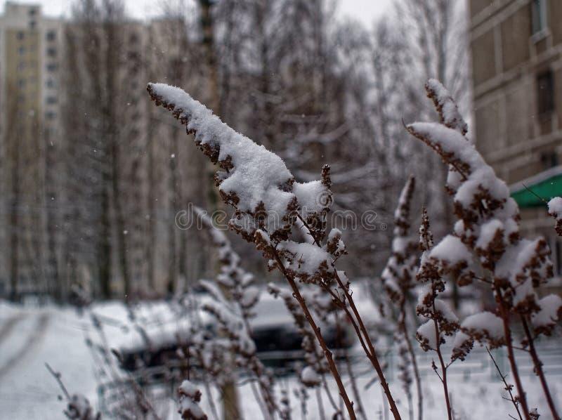 Trawa zakrywająca z śniegiem w parku fotografia stock