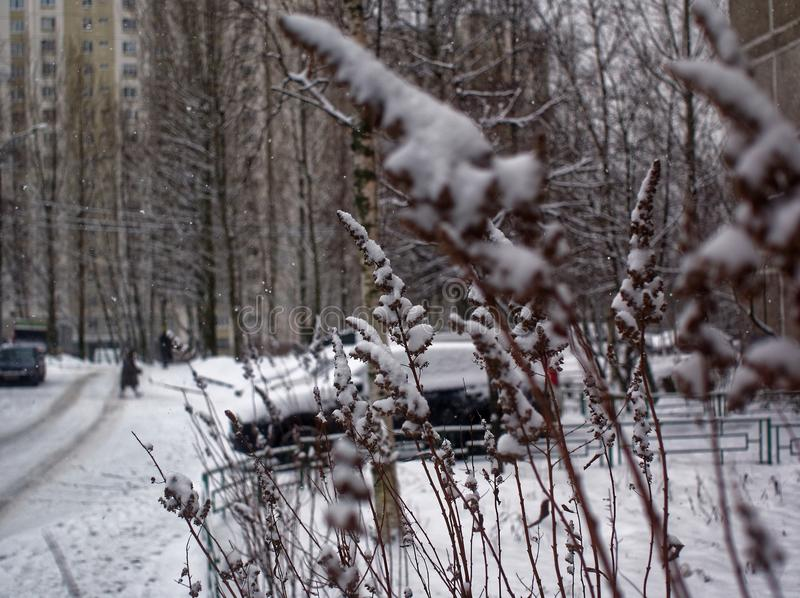 Trawa zakrywająca z śniegiem w parku obrazy stock