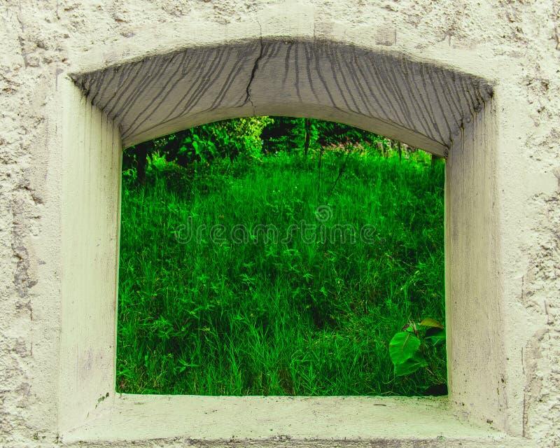 trawa zielona po drugiej stronie obrazy stock