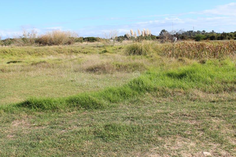 Trawiaści pola przy Dużym bagnem Bunbury Zachodni Australia obrazy royalty free