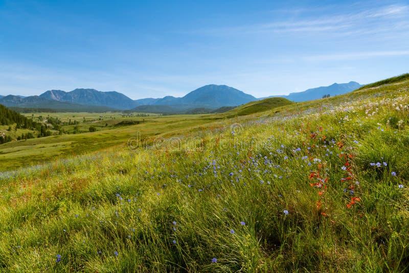 Trawiaści zboczy wildflowers z polami i górami w odległości obraz royalty free