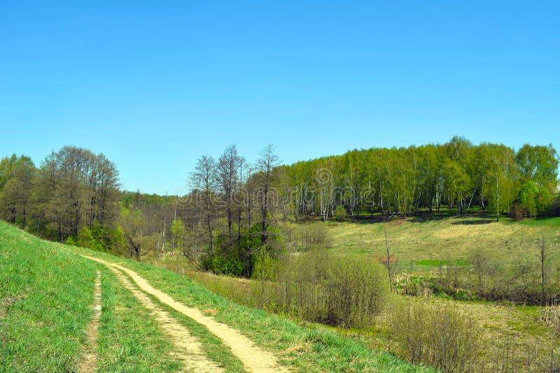 Trawiasta droga, zieleni wzg?rza, brzoza las i niebieskie niebo, fotografia stock