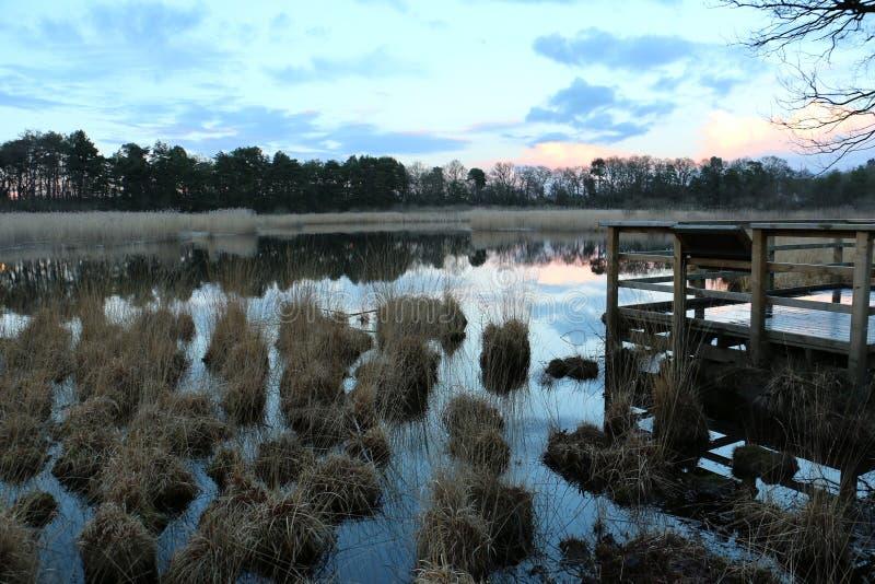trawiasty jezioro fotografia stock