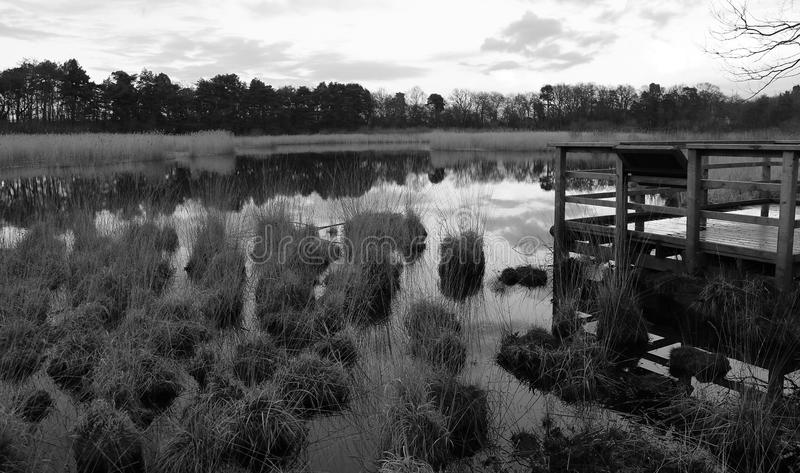 Trawiasty jezioro B&W zdjęcia stock