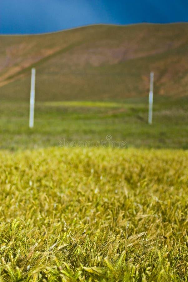 trawiasty krajobrazowy wiejski zdjęcie royalty free