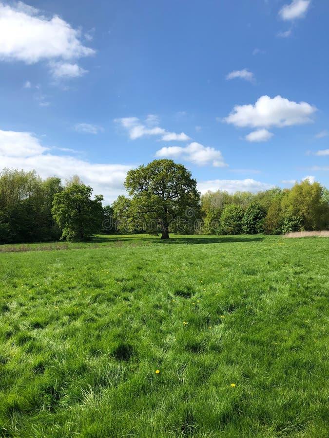 Trawiasty pole i drzewa obrazy royalty free