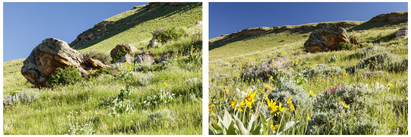 Trawiasty zbocza balsam korzenia kopalin kolaż fotografia stock