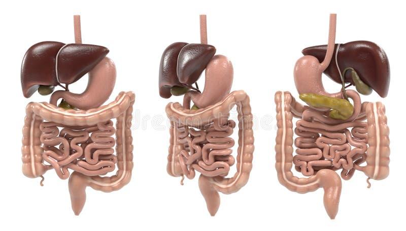 Trawienny system ilustracja wektor