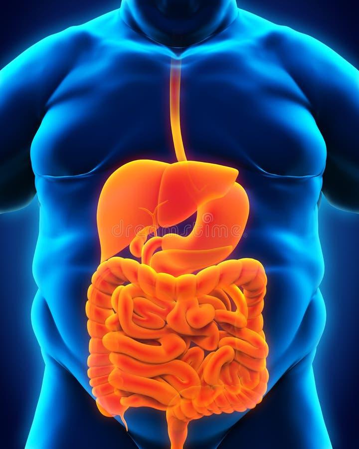Trawienny system Z nadwagą ciało ilustracji