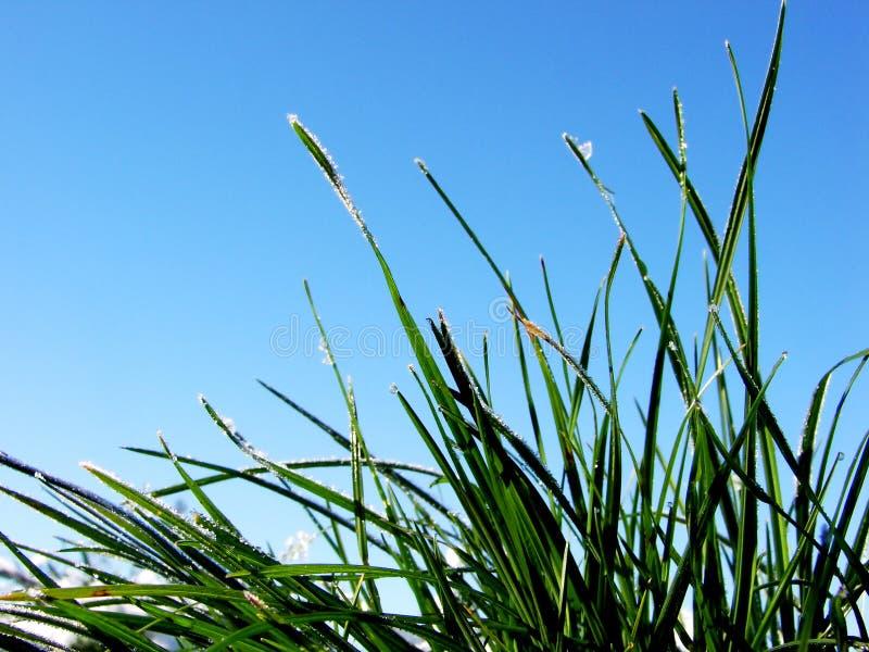 trawnik zdjęcia stock