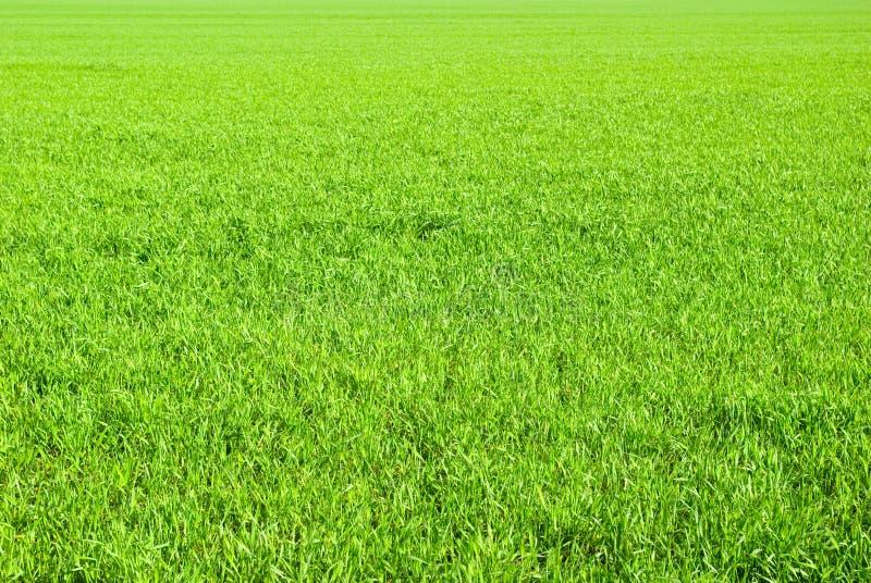 trawnik zdjęcie stock