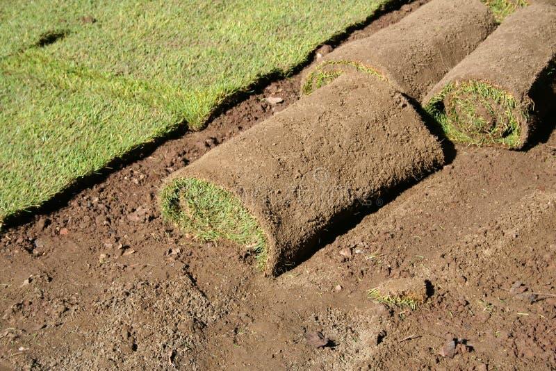 trawnik bułeczki zdjęcie royalty free