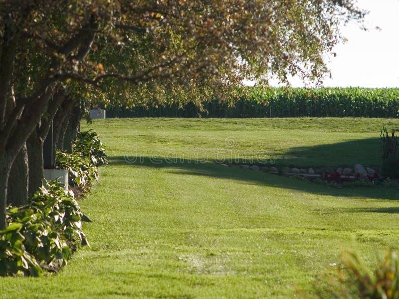 trawnika na drzewo zdjęcie royalty free