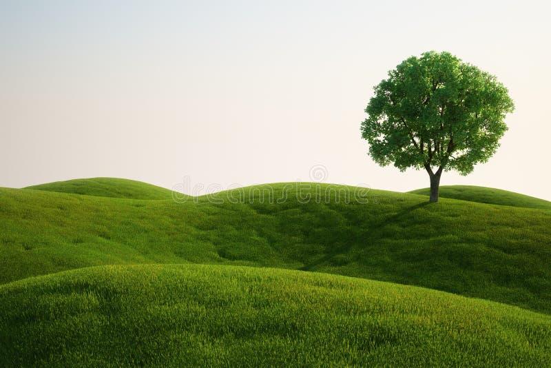 trawy śródpolny drzewo