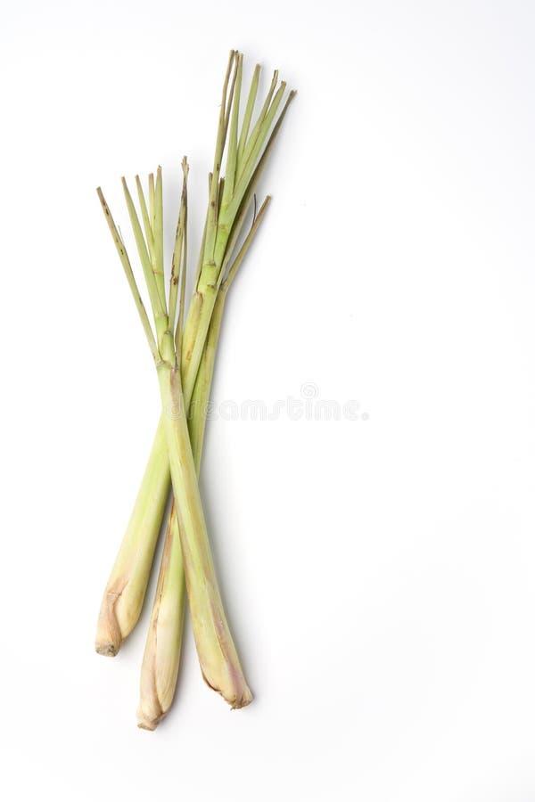 trawy świeża cytryna składa trzy zdjęcie stock