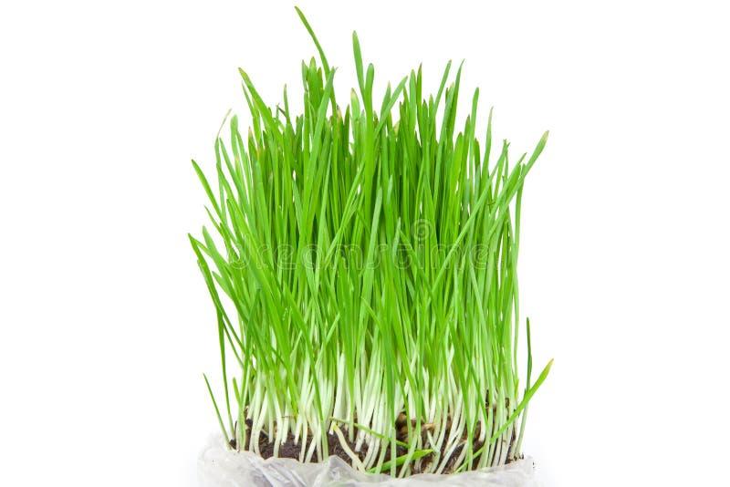 trawy świeża zieleń odizolowywał obrazy stock