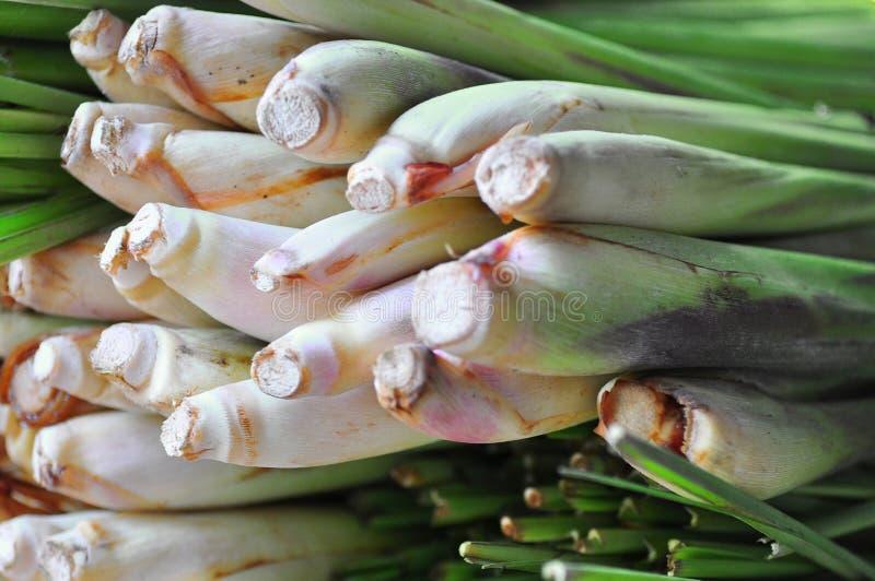 trawy cytryna obrazy stock