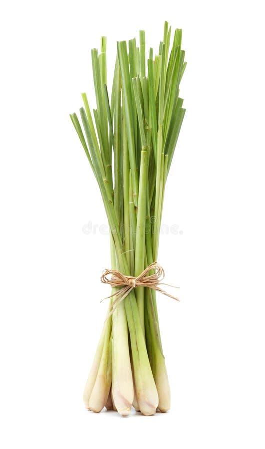 trawy cytryna obrazy royalty free