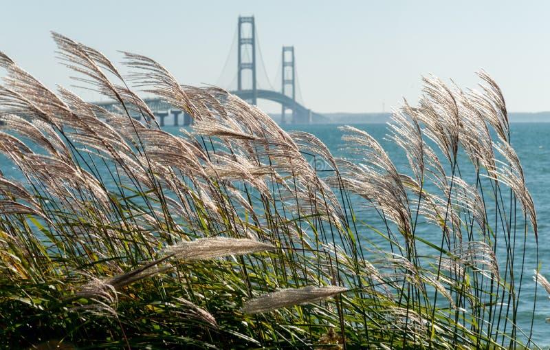 Trawy dmucha w wiatrze przy Mackinac mostem w Michigan obraz stock