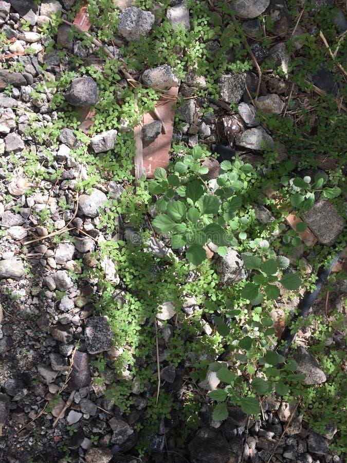 Trawy dobry pic fotografia stock