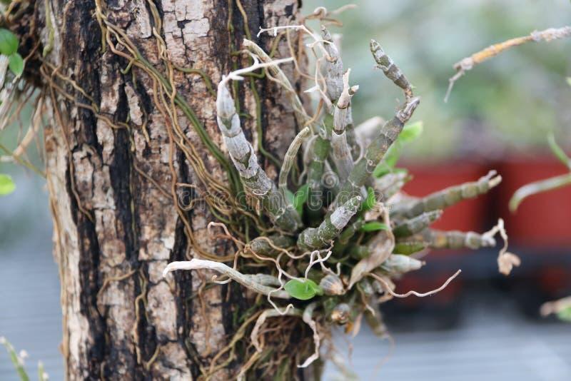 Trawy dorośnięcie na drzewie obrazy royalty free