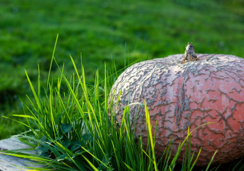 trawy duży bania fotografia stock