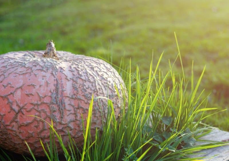trawy duży bania zdjęcie stock