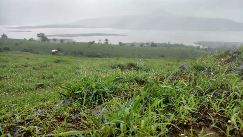 Trawy hd obrazek z jeziornym widokiem zdjęcie stock