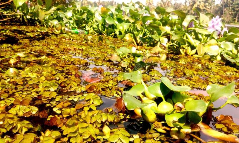 trawy jeziorna rośliien woda obrazy stock