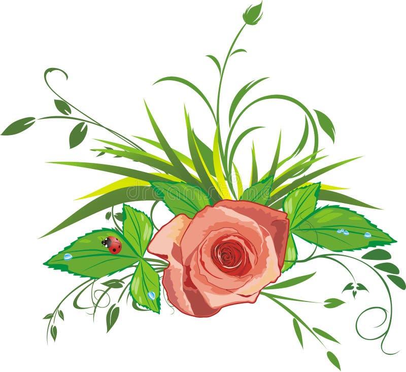 trawy ladybird wzrastał ilustracja wektor