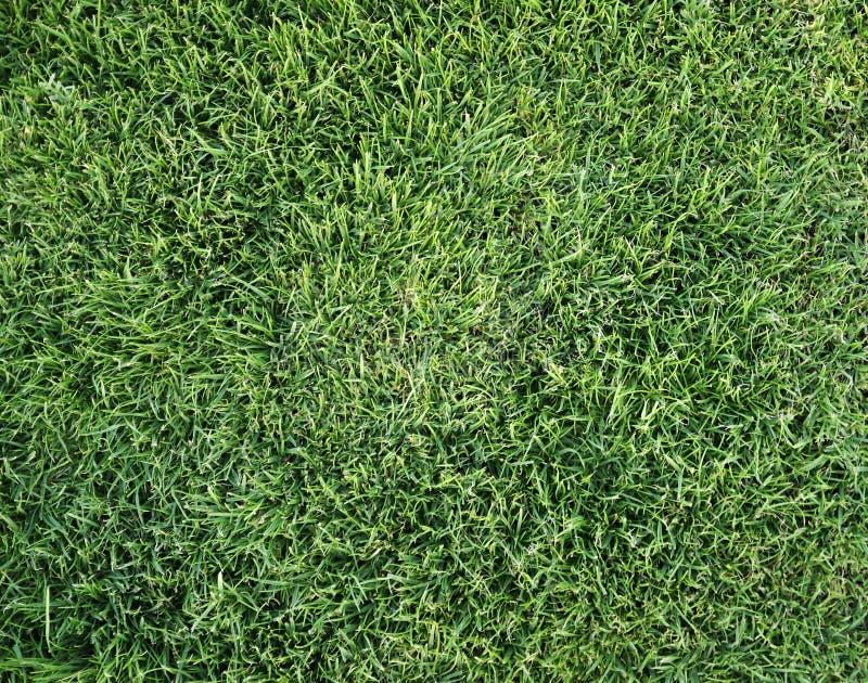 trawy lato zdjęcia stock