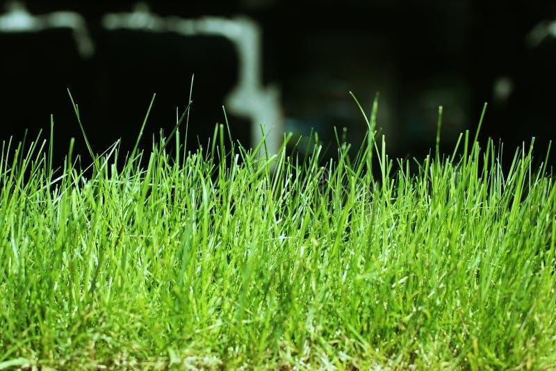 Trawy makro- ziemia obraz royalty free