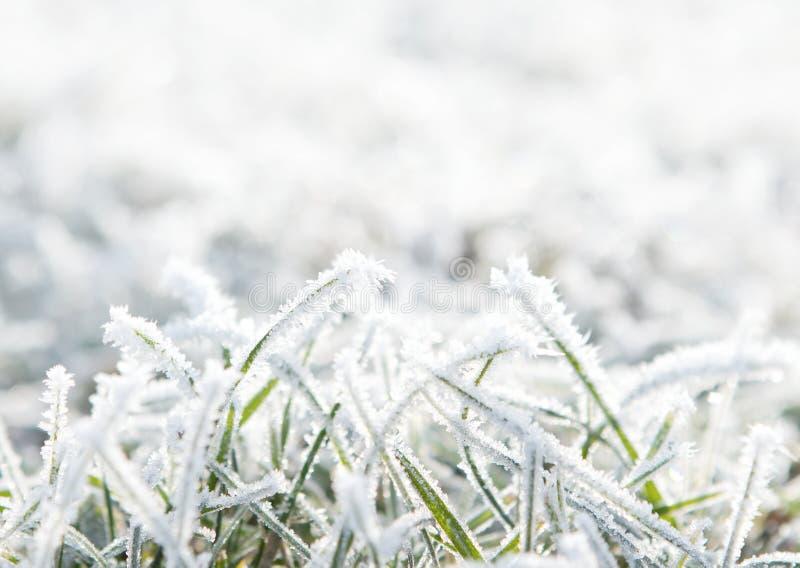 trawy mroźna zima zdjęcie royalty free