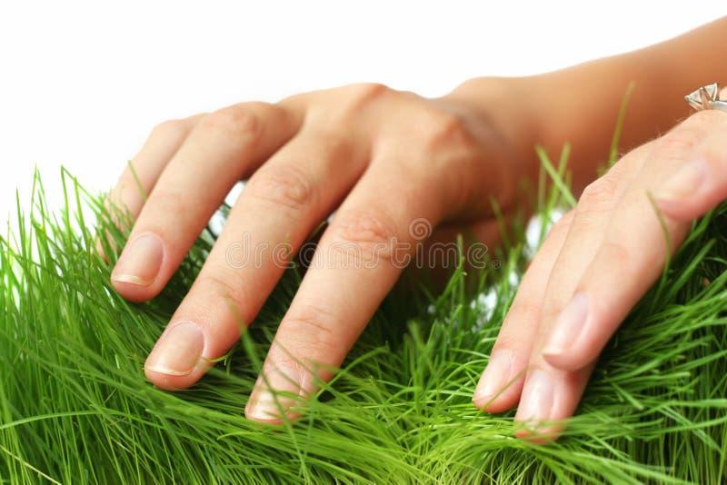 trawy na pożegnanie zdjęcie stock