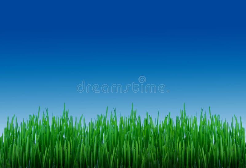 trawy niebo fotografia stock