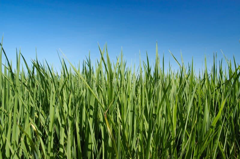 trawy niebo zdjęcia stock