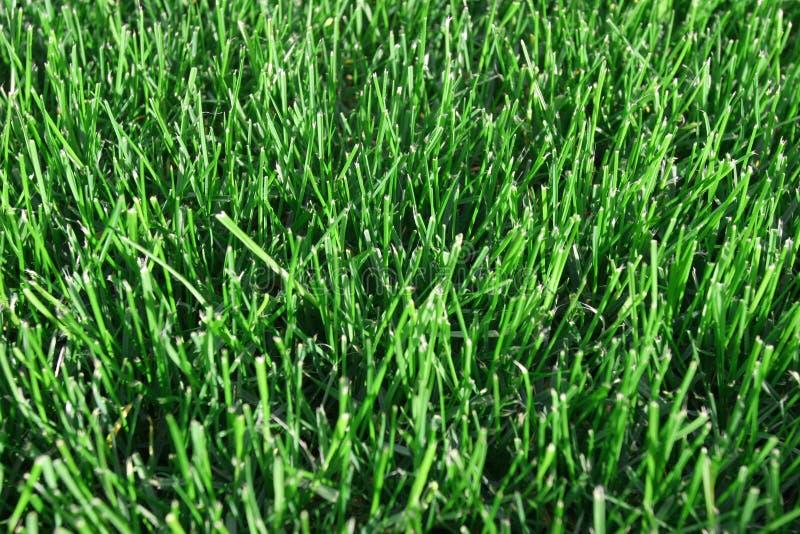 trawy obcięta green zdjęcia stock