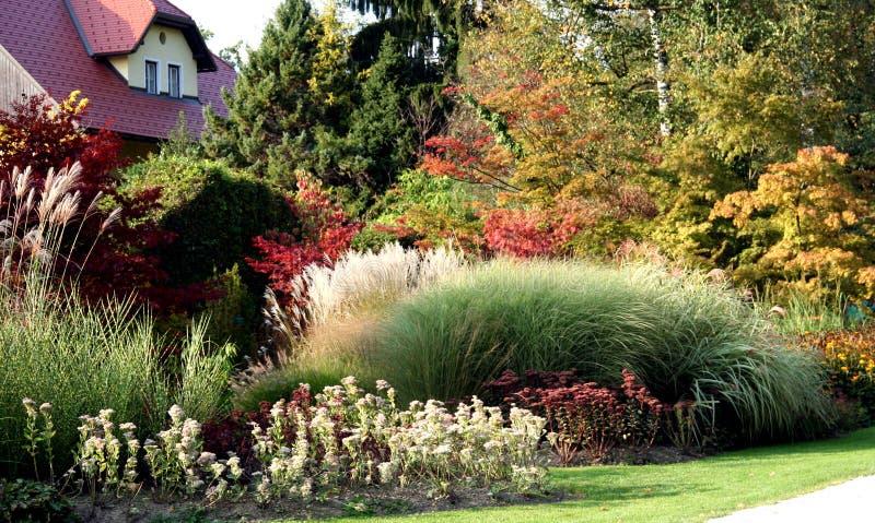 Trawy Perennial Obraz Royalty Free