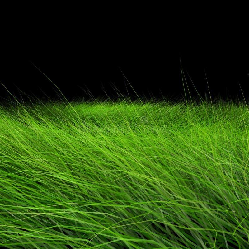 trawy piękna zieleń ilustracja wektor