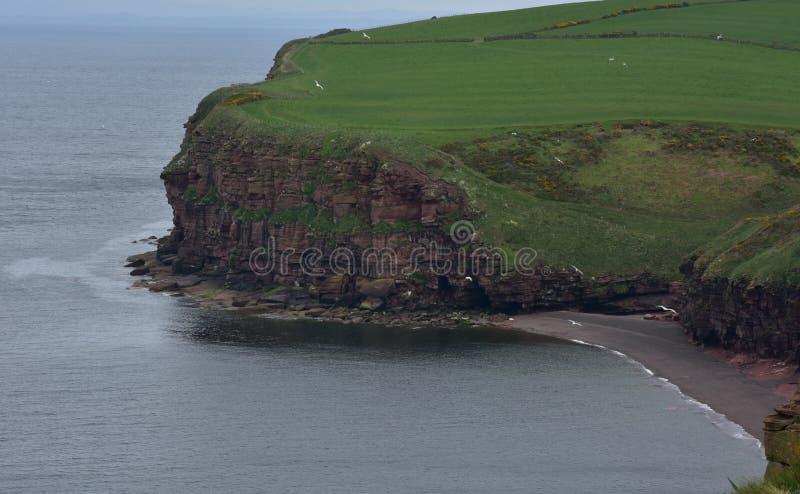 Trawy pole Nad Sea Cliff z piasek plażą na Fleswick zatoce zdjęcie stock