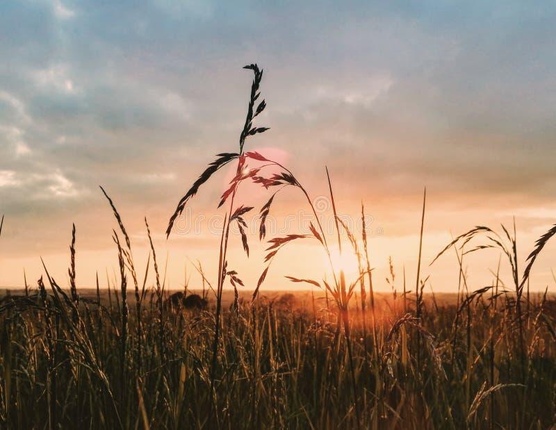 Trawy pole z słońcem w plecy zdjęcie stock