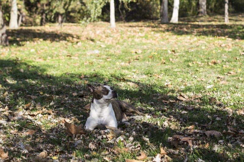 trawy psa leżącego obrazy royalty free