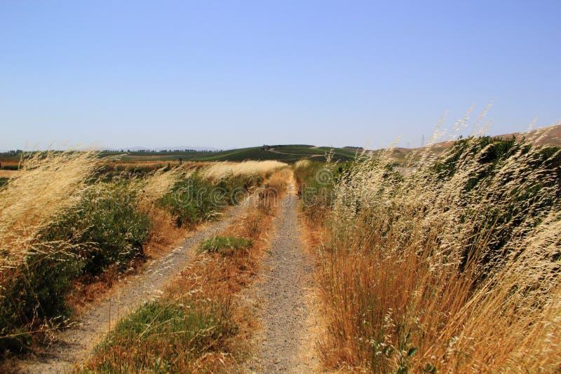 Trawy w Solankowym bagnie przy Napy doliną zdjęcia royalty free