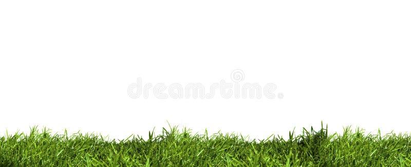 trawy warstwa zdjęcia stock