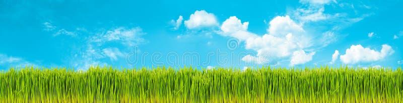 trawy wiosna obraz stock