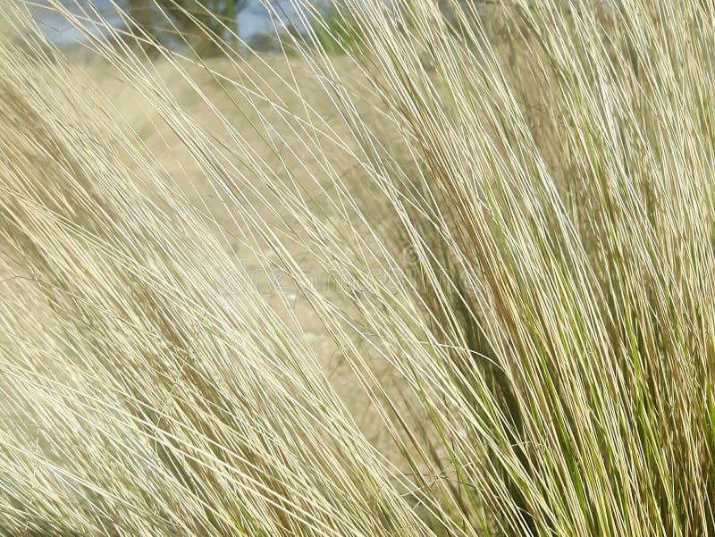 Trawy zakończenia tekstury zieleń obrazy royalty free